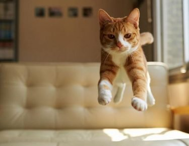 Chat volant
