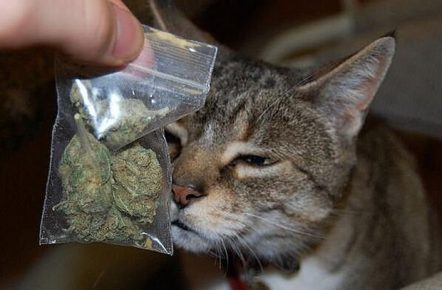 Chat et un sac de marijuana
